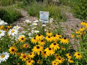 Celebrate Earth Day With Sustainable Severn Sound