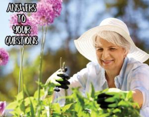 Virtual – Ask An Expert: Gardening & Landscaping